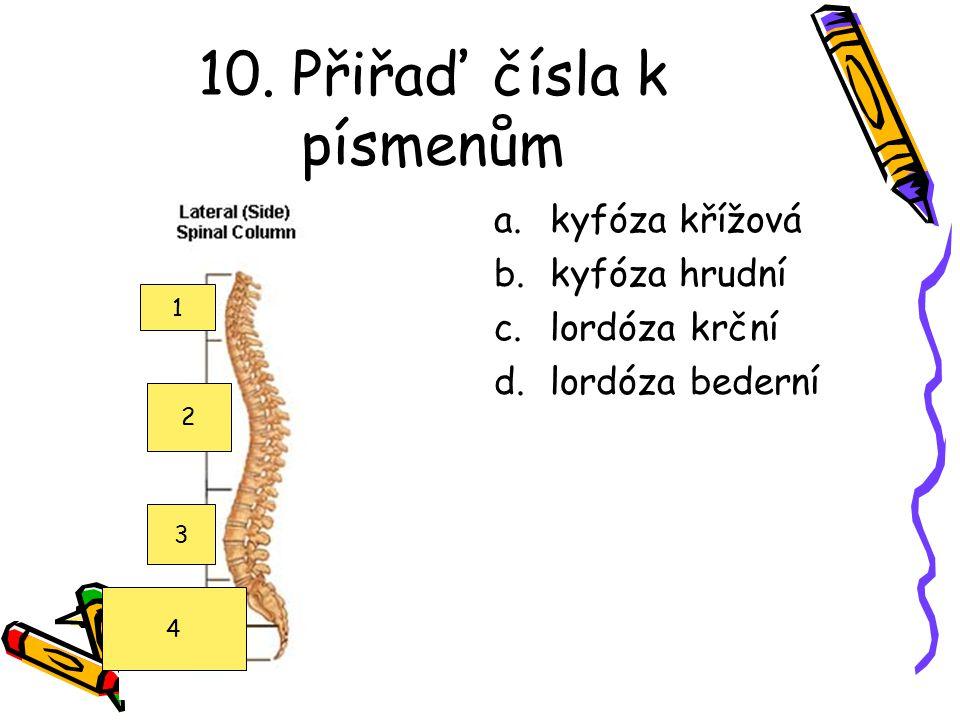 10. Přiřaď čísla k písmenům a.kyfóza křížová b.kyfóza hrudní c.lordóza krční d.lordóza bederní 1 2 3 4
