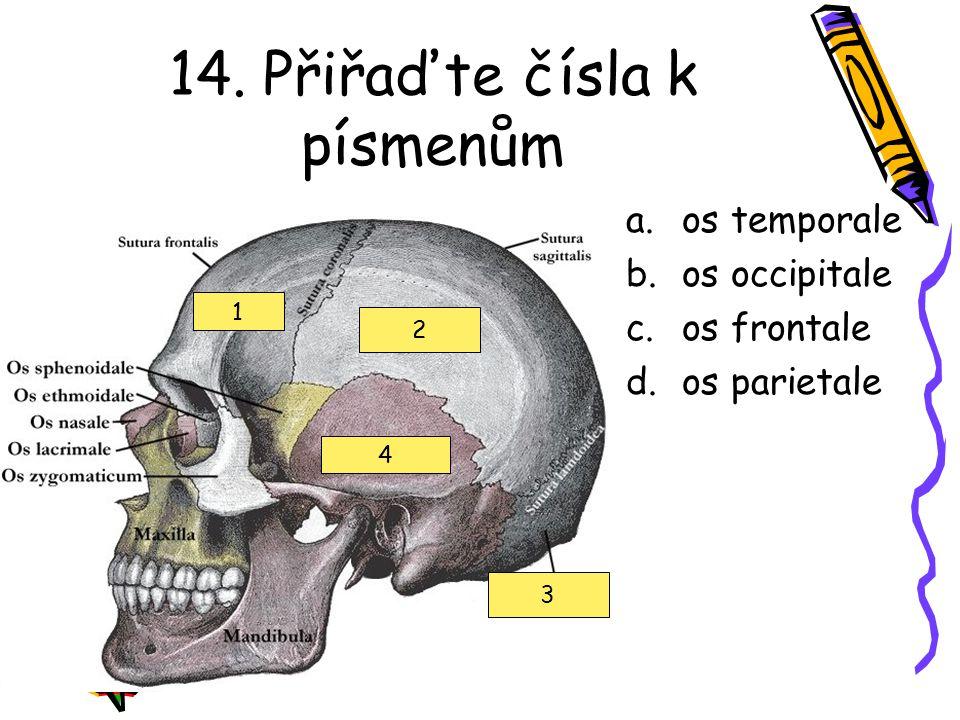 14. Přiřaďte čísla k písmenům a.os temporale b.os occipitale c.os frontale d.os parietale 1 2 3 4
