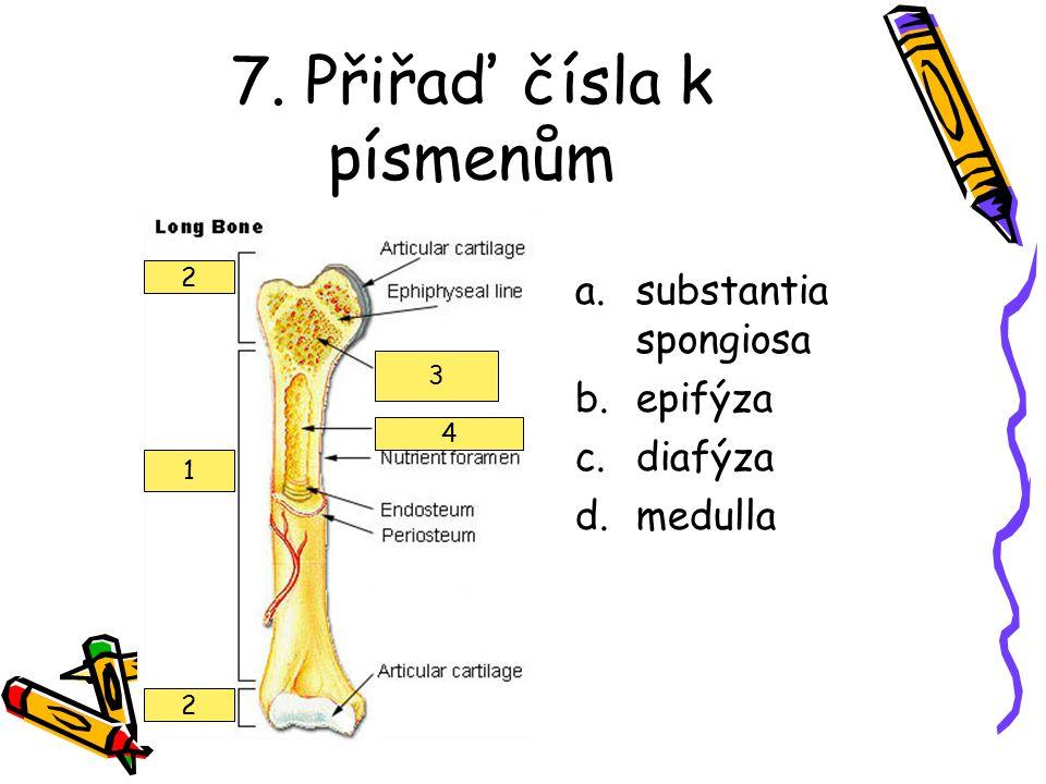 7. Přiřaď čísla k písmenům a.substantia spongiosa b.epifýza c.diafýza d.medulla 1 2 2 3 4