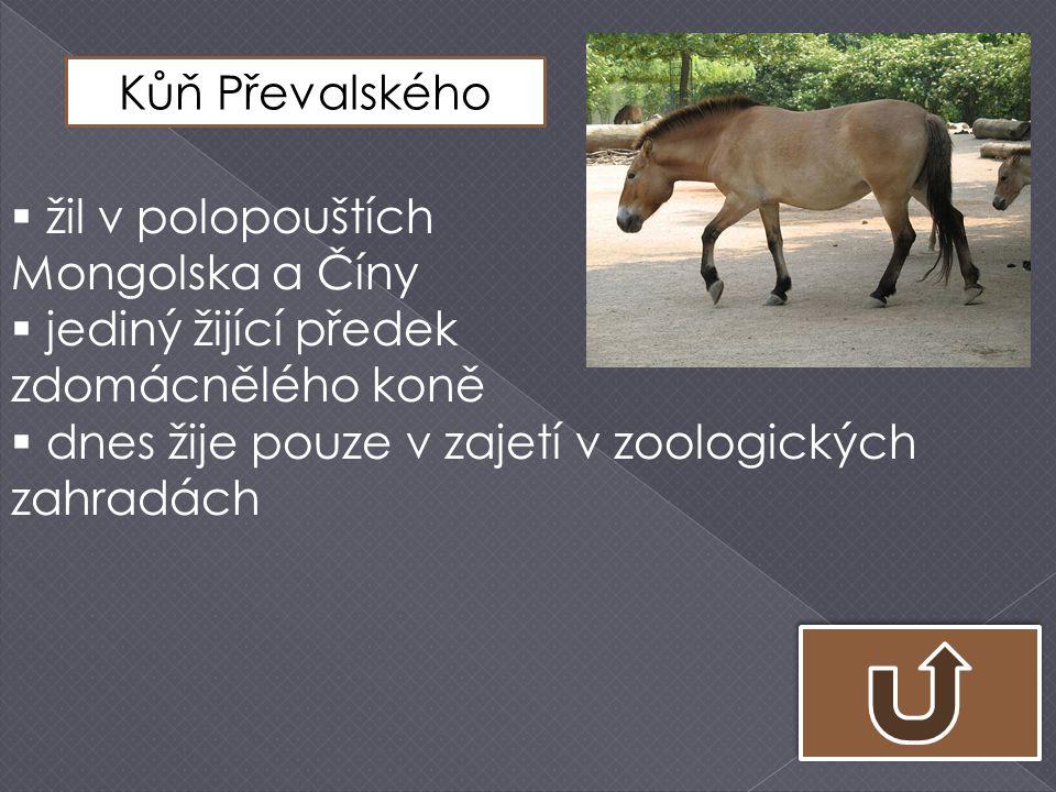MULA = oslí hřebec a koňská klisna MEZEK = koňský hřebec a oslí klisna
