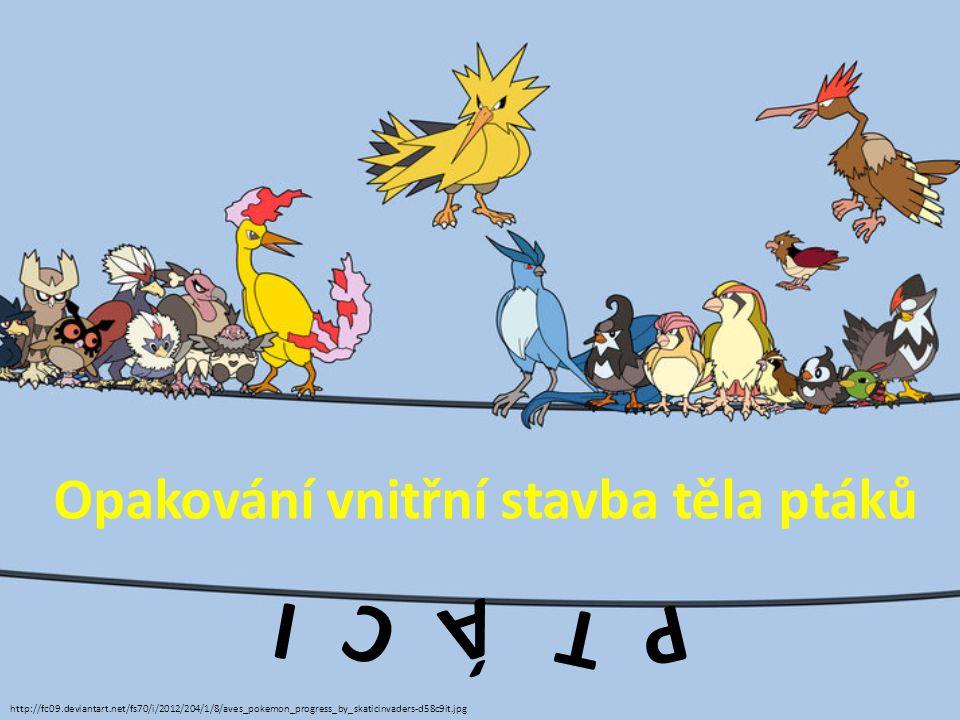 P T Á C I Opakování vnitřní stavba těla ptáků http://fc09.deviantart.net/fs70/i/2012/204/1/8/aves_pokemon_progress_by_skaticinvaders-d58c9it.jpg