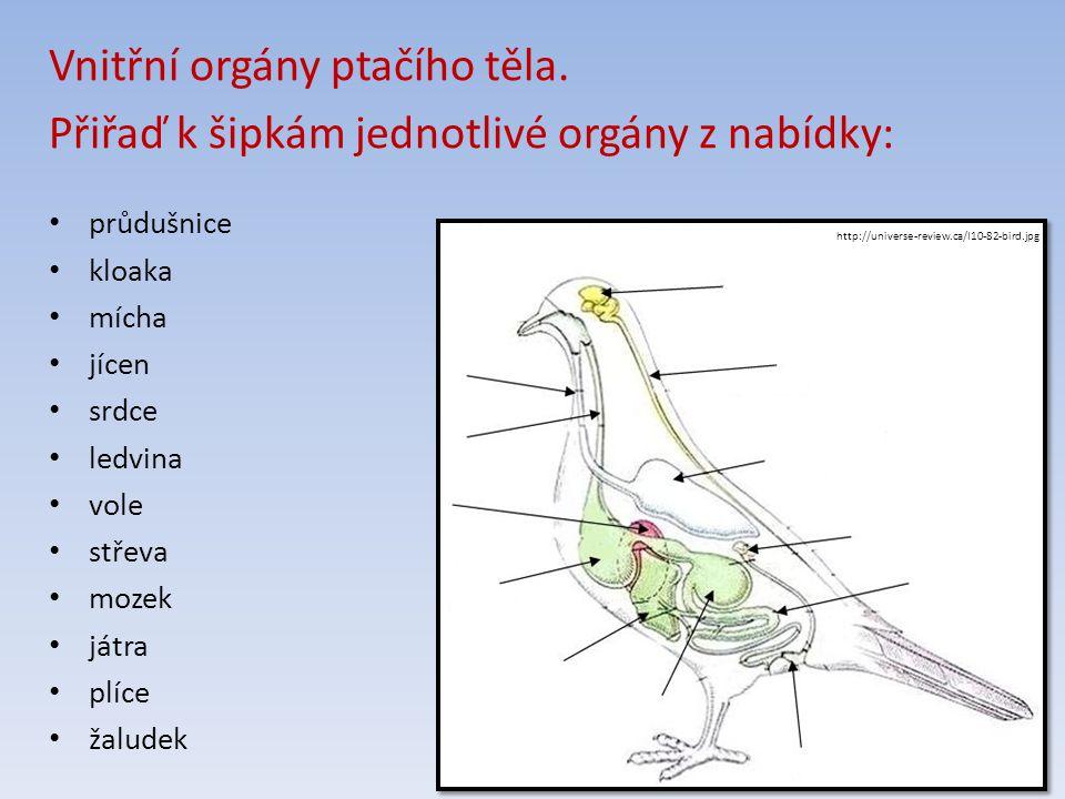 http://universe-review.ca/I10-82-bird.jpg Vnitřní orgány ptačího těla.