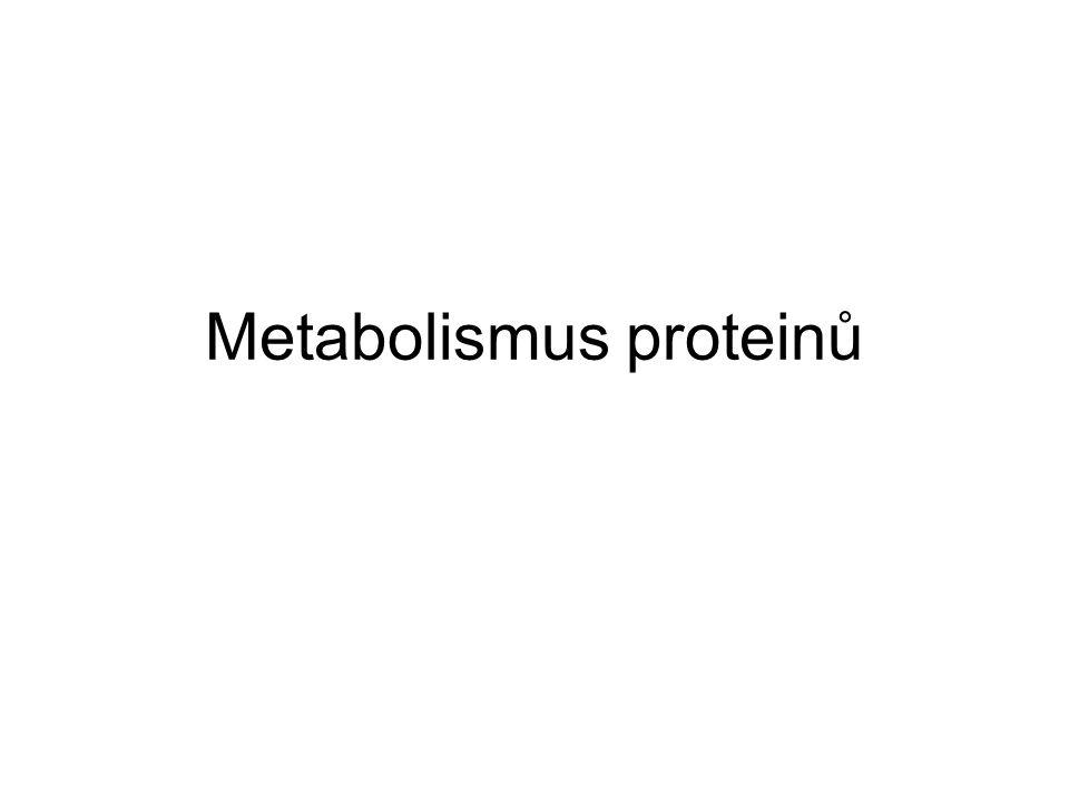 hlavní stavební materiál buněk a tkání u heterotrofních organismů prakticky jediný zdroj dusíku pro organismus neexistují zásobní proteiny –proteiny se neustále odbourávají a syntetizují je nutný dostatečný přísun proteinů v potravě –12 neesenciálních aminokyselin –8 esenciálních aminokyselin organismus si je nedovede syntetizovat