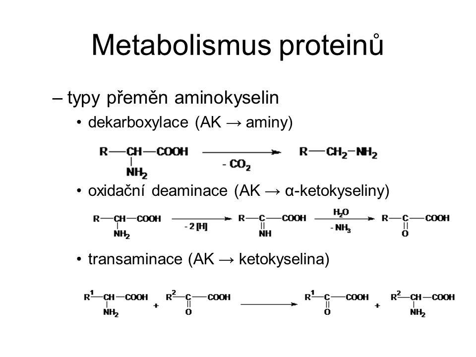 Metabolismus proteinů –typy přeměn aminokyselin dekarboxylace (AK → aminy) oxidační deaminace (AK → α-ketokyseliny) transaminace (AK → ketokyselina)