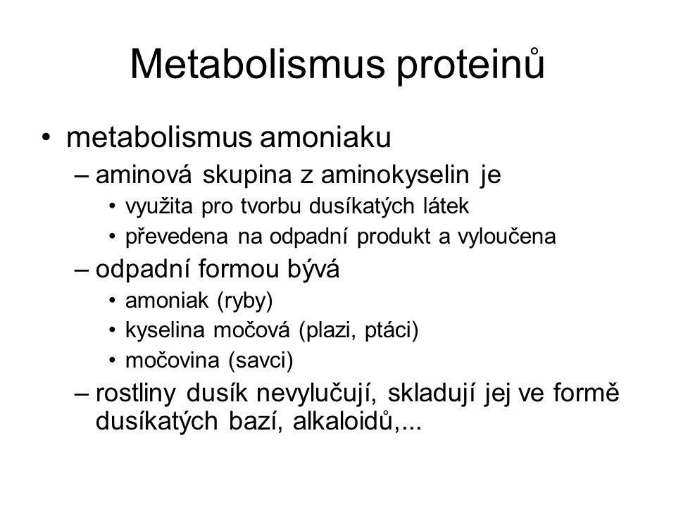 Metabolismus proteinů tvorba močoviny –ornithinový cyklus –v játrech –jako močovina je vyloučeno 80 – 90 % dusíku, zbytek vytváří s kyselinami NH 4 + soli –vstupní látky ornithinového cyklu jsou CO 2 2 aminoskupiny z aminokyselin ornithin – neproteinogenní aminokyselina
