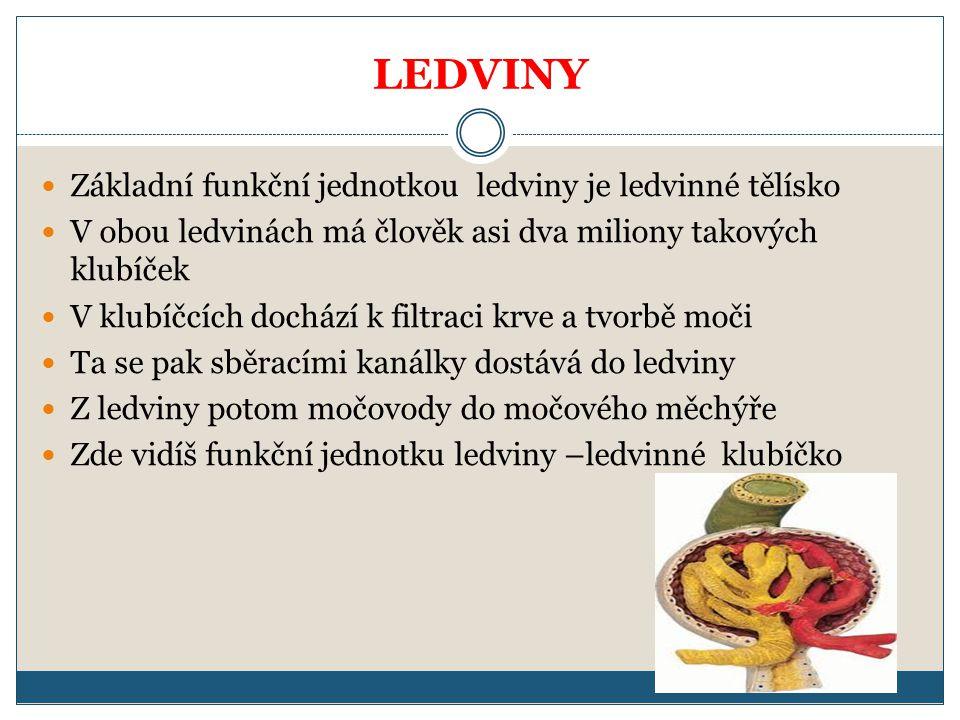 LEDVINY Základní funkční jednotkou ledviny je ledvinné tělísko V obou ledvinách má člověk asi dva miliony takových klubíček V klubíčcích dochází k filtraci krve a tvorbě moči Ta se pak sběracími kanálky dostává do ledviny Z ledviny potom močovody do močového měchýře Zde vidíš funkční jednotku ledviny –ledvinné klubíčko