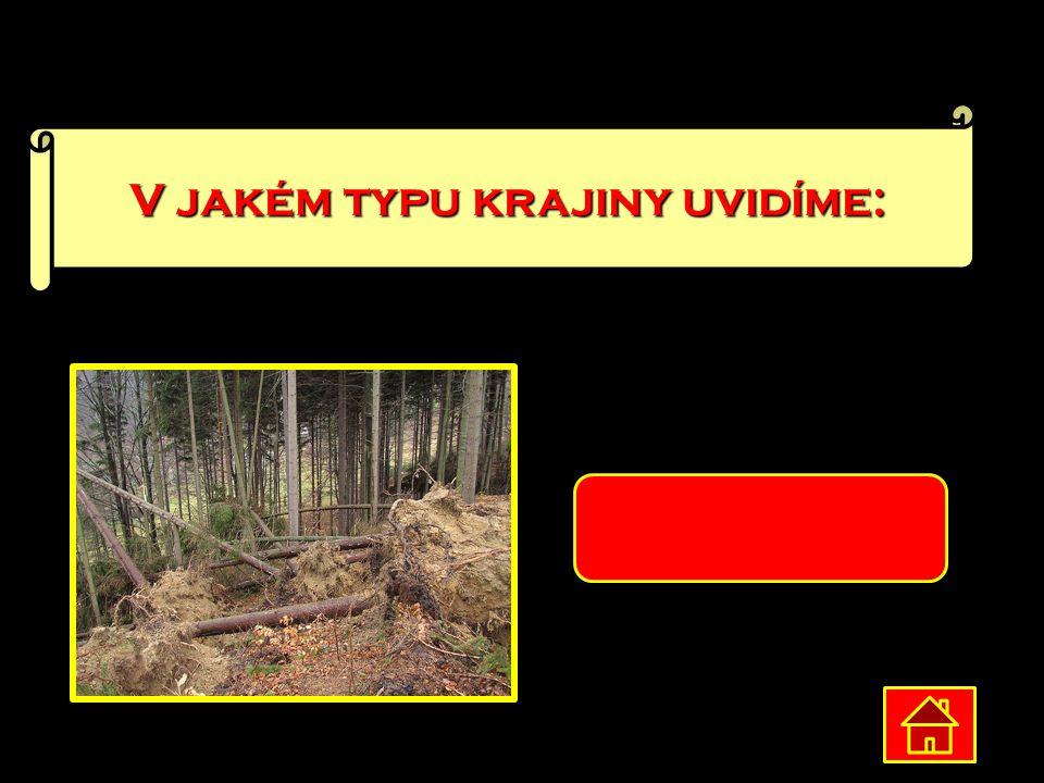 V jakém typu krajiny uvidíme: Lesnatá krajina