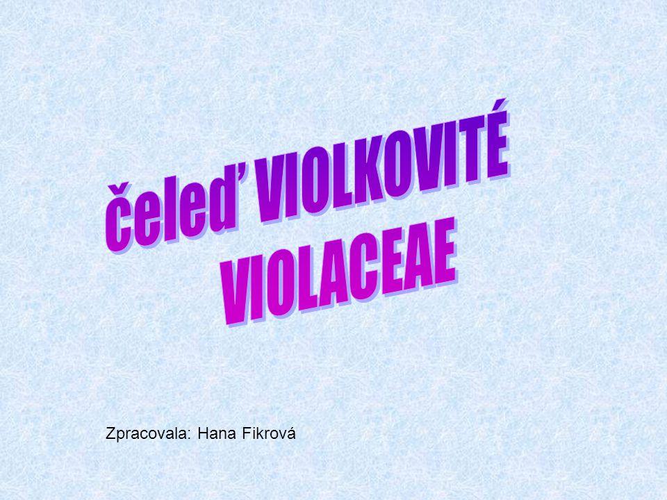 Charakteristika čeledi violkovitých V mírném pásu to jsou jen byliny, ale v subtropech a v tropech to mohou být i keře až menší stromy nebo liány.