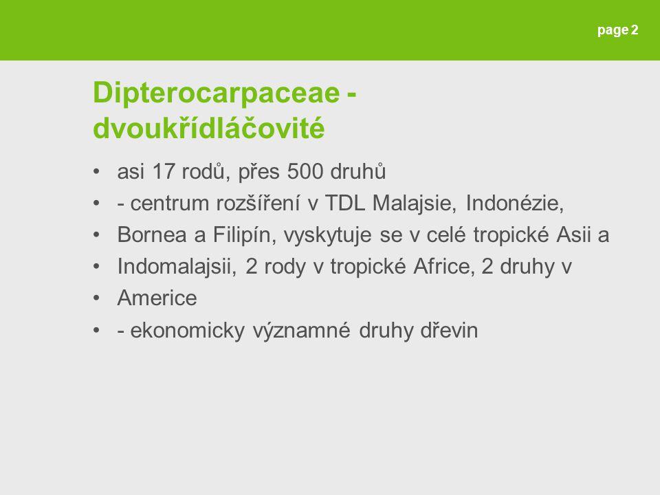 Dipterocarpaceae - dvoukřídláčovité asi 17 rodů, přes 500 druhů - centrum rozšíření v TDL Malajsie, Indonézie, Bornea a Filipín, vyskytuje se v celé t