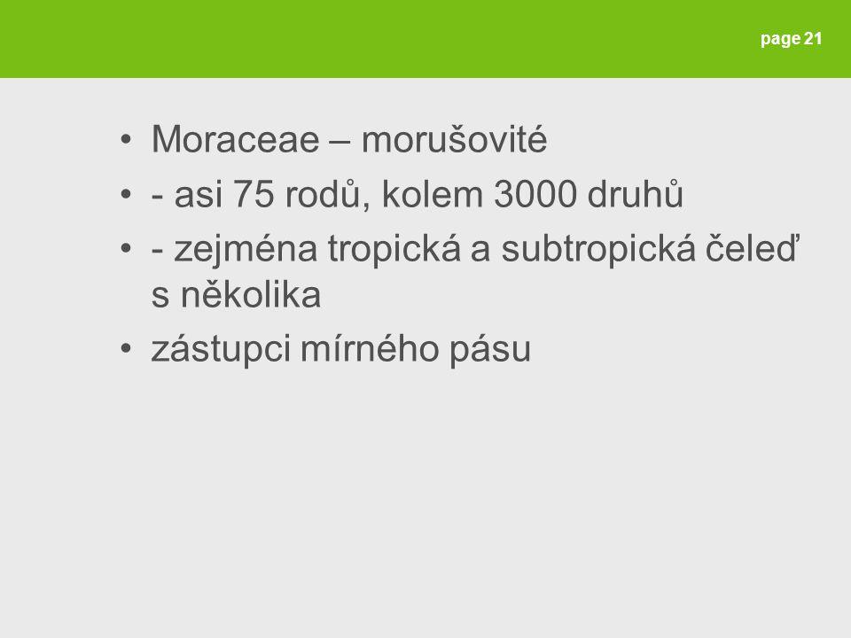 Moraceae – morušovité - asi 75 rodů, kolem 3000 druhů - zejména tropická a subtropická čeleď s několika zástupci mírného pásu page 21