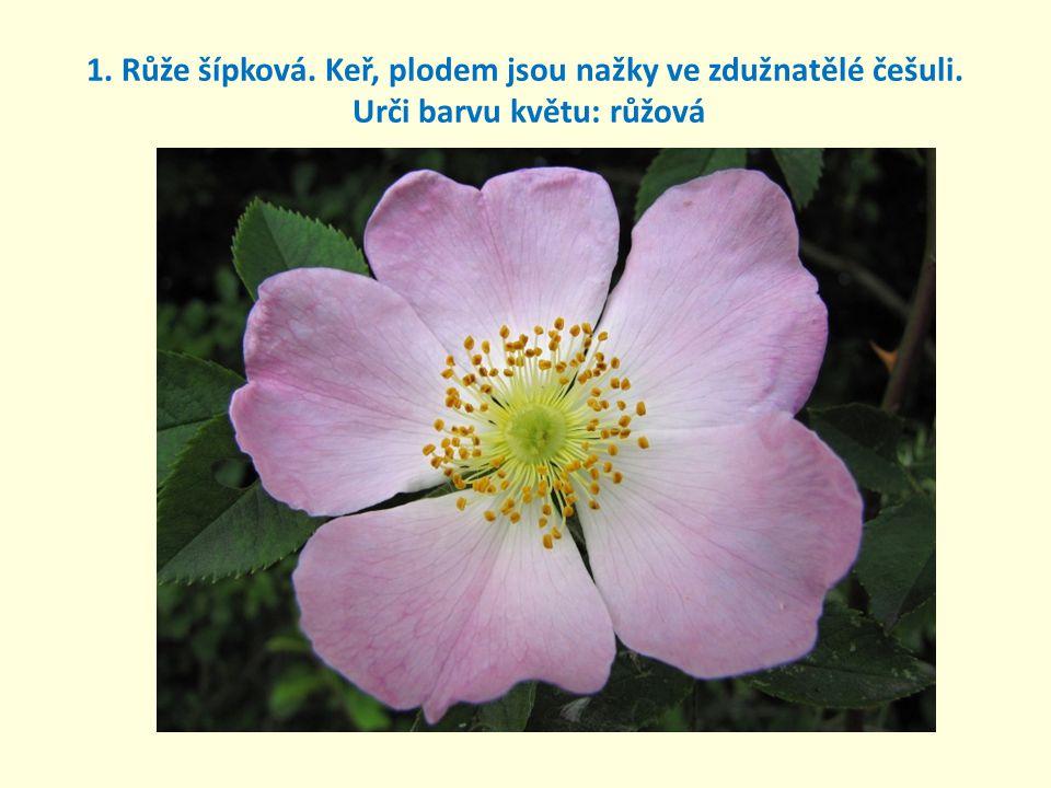 1. Růže šípková. Keř, plodem jsou nažky ve zdužnatělé češuli. Urči barvu květu: růžová