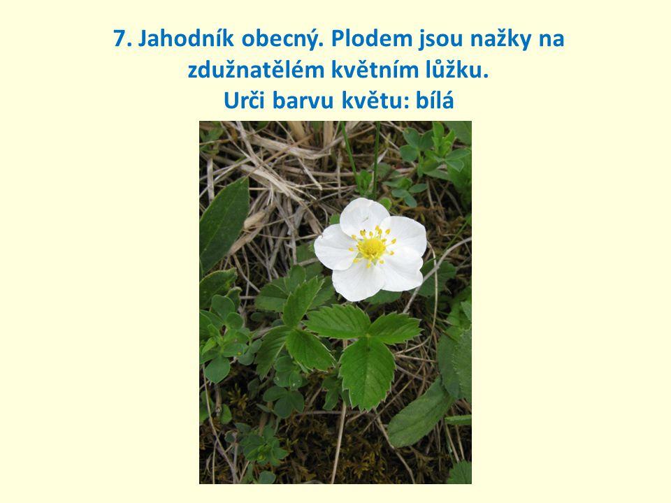 7. Jahodník obecný. Plodem jsou nažky na zdužnatělém květním lůžku. Urči barvu květu: bílá