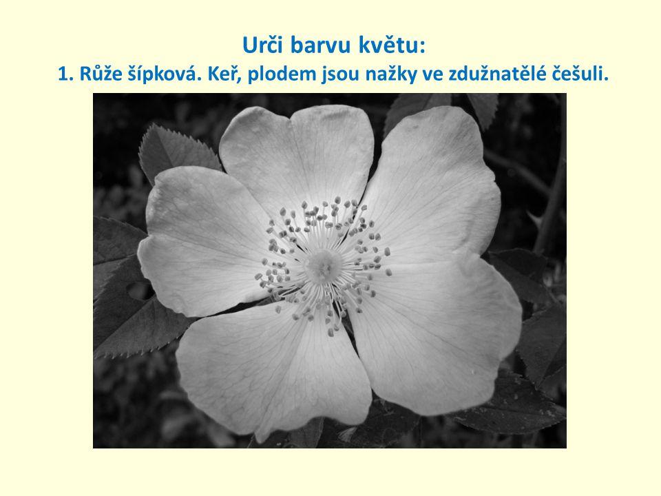 Urči barvu květu: 1. Růže šípková. Keř, plodem jsou nažky ve zdužnatělé češuli.