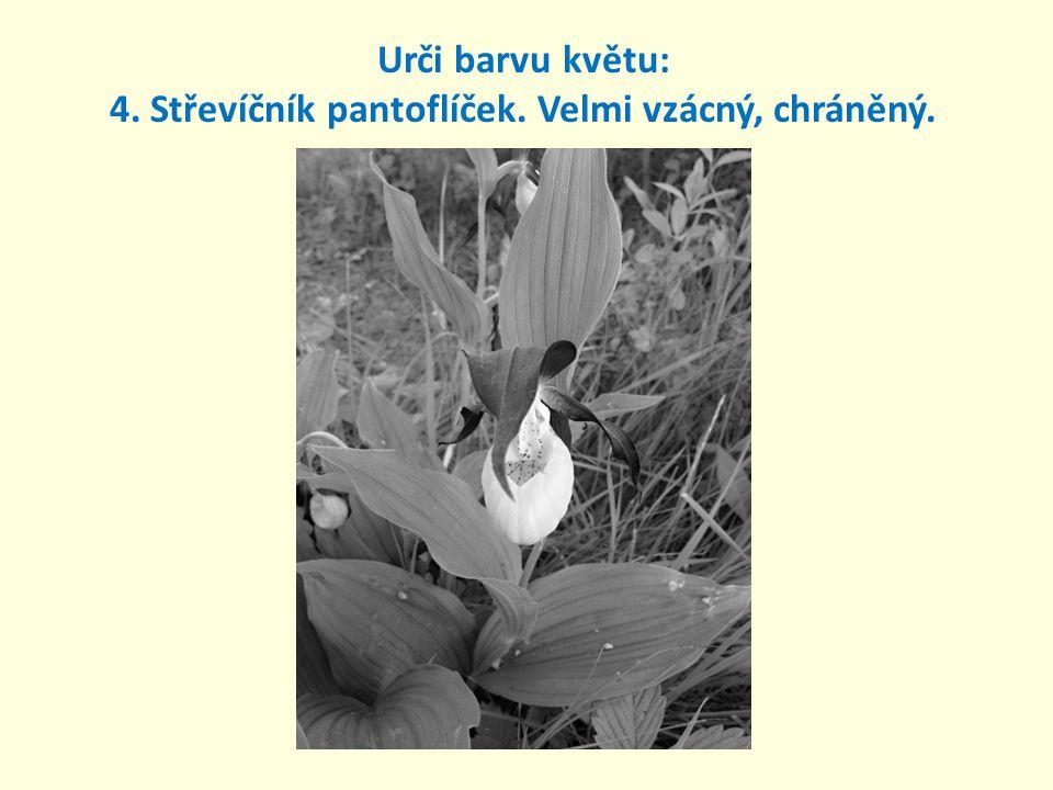 4. Střevíčník pantoflíček. Velmi vzácný, chráněný. Urči barvu květu: žlutá a hnědá.