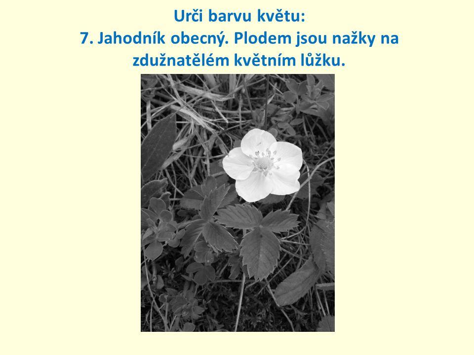 Urči barvu květu: 7. Jahodník obecný. Plodem jsou nažky na zdužnatělém květním lůžku.