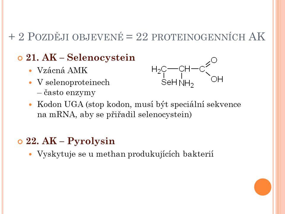 + 2 P OZDĚJI OBJEVENÉ = 22 PROTEINOGENNÍCH AK 21. AK – Selenocystein Vzácná AMK V selenoproteinech – často enzymy Kodon UGA (stop kodon, musí být spec