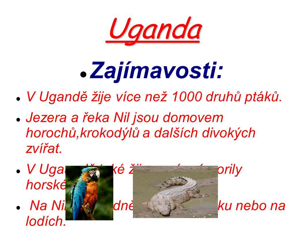 Uganda Zajímavosti: V Ugandě žije více než 1000 druhů ptáků. Jezera a řeka Nil jsou domovem horochů,krokodýlů a dalších divokých zvířat. V Ugaandě tak