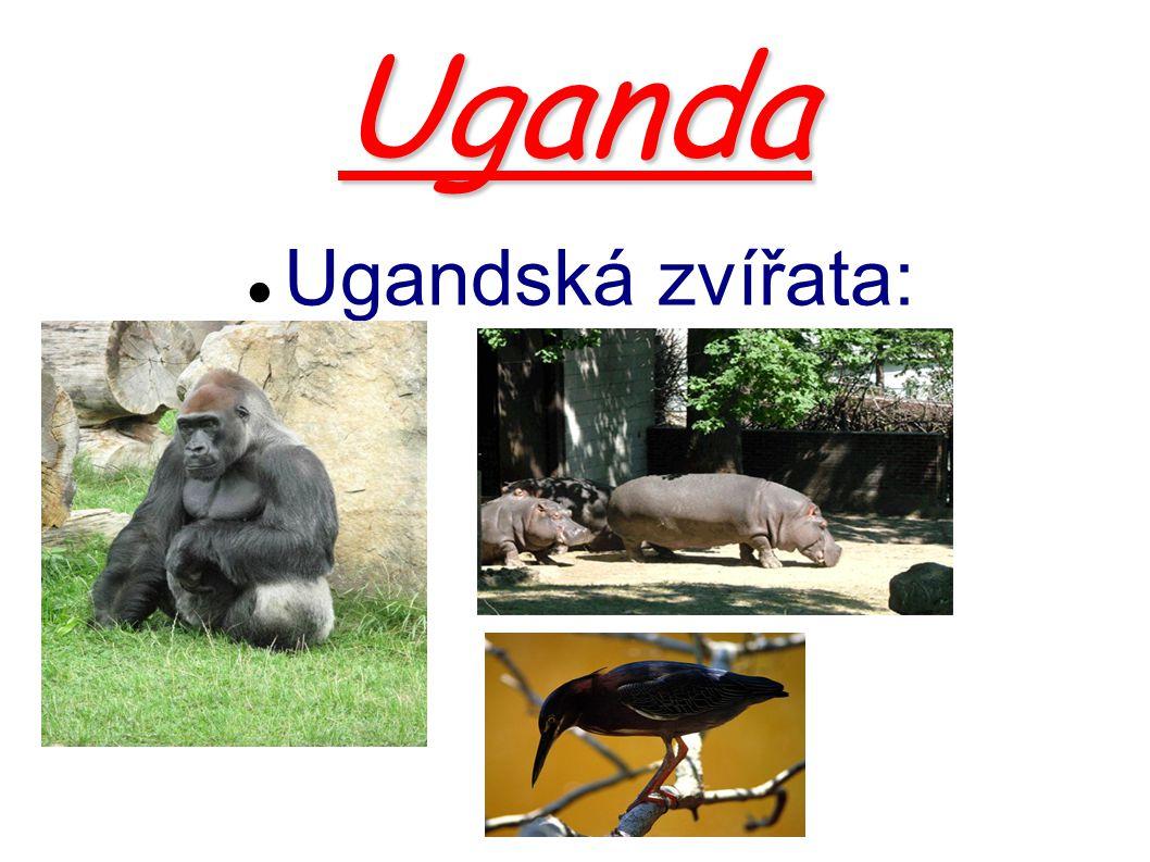 Uganda Ugandská zvířata: