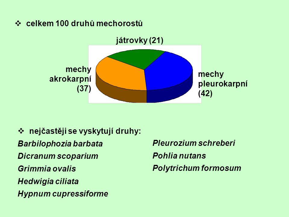 v celkem 100 druhů mechorostů játrovky (21) mechy akrokarpní (37) mechy pleurokarpní (42) v nejčastěji se vyskytují druhy: Barbilophozia barbata Dicra