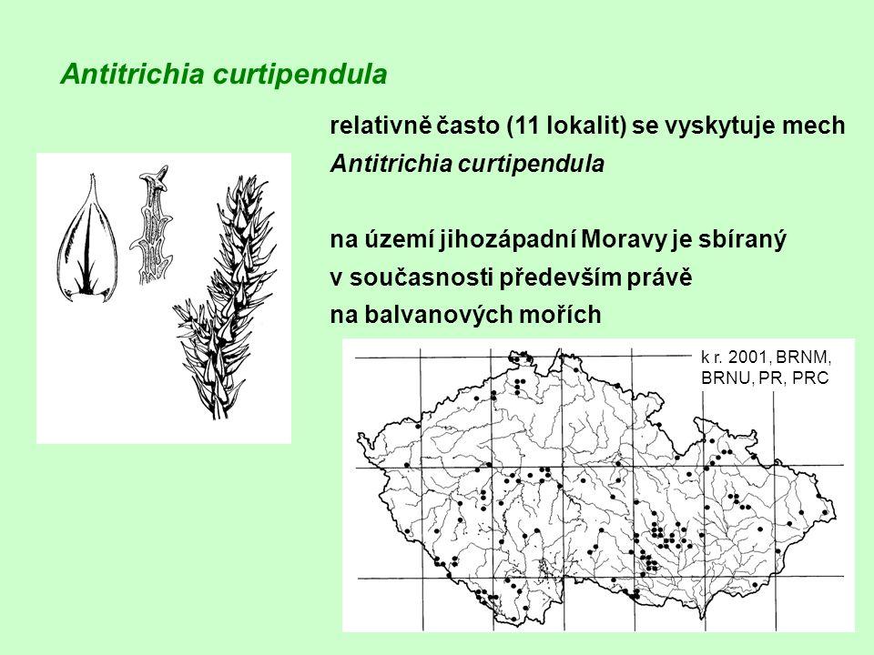 relativně často (11 lokalit) se vyskytuje mech Antitrichia curtipendula na území jihozápadní Moravy je sbíraný v současnosti především právě na balvan