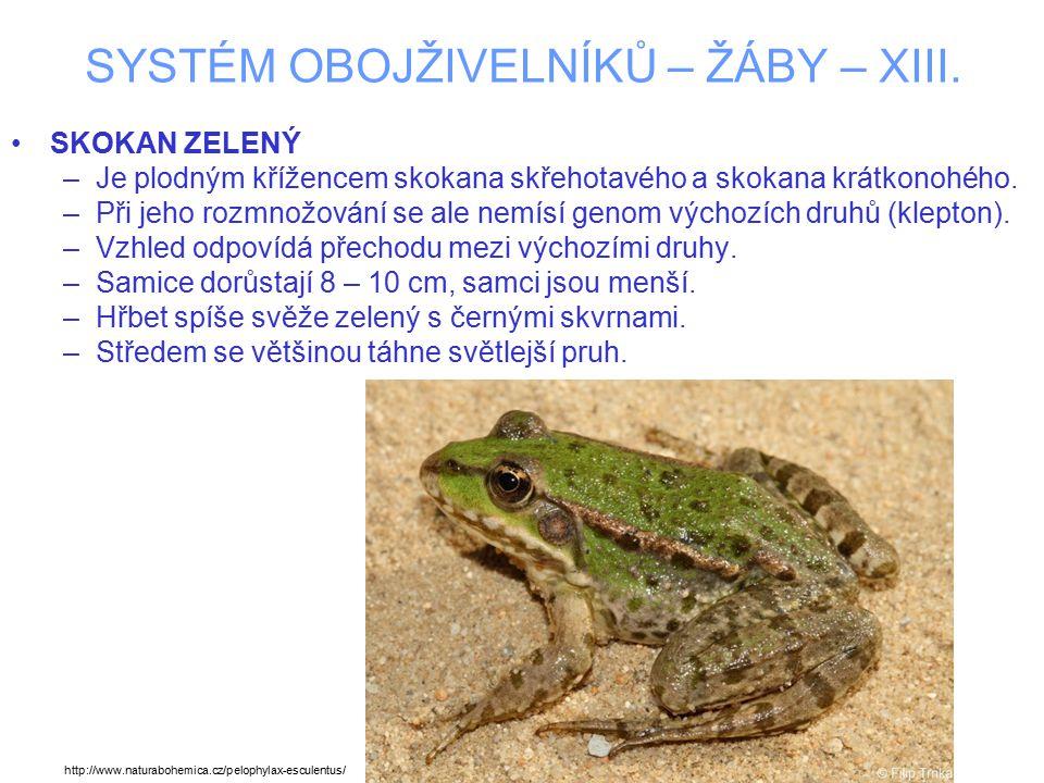 SYSTÉM OBOJŽIVELNÍKŮ – ŽÁBY – XIII. SKOKAN ZELENÝ –Je plodným křížencem skokana skřehotavého a skokana krátkonohého. –Při jeho rozmnožování se ale nem