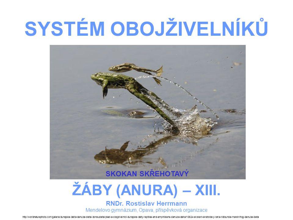 SYSTÉM OBOJŽIVELNÍKŮ – ŽÁBY – XIII.SKOKAN SKŘEHOTAVÝ –Je největší z našich žab.