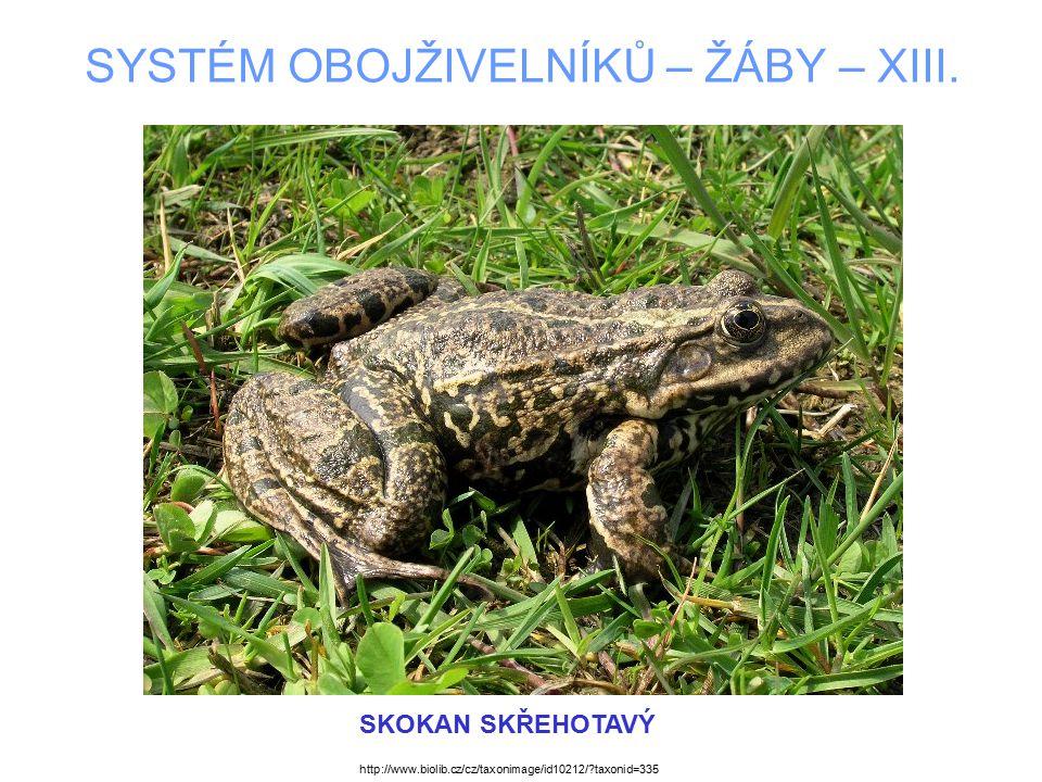 SYSTÉM OBOJŽIVELNÍKŮ – ŽÁBY – XIII. SKOKAN SKŘEHOTAVÝ http://www.biolib.cz/cz/taxonimage/id10212/?taxonid=335