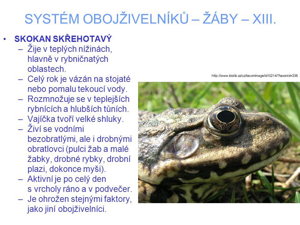SYSTÉM OBOJŽIVELNÍKŮ – ŽÁBY – XIII.SKOKAN KRÁTKONOHÝ –Dorůstá do 7.5 cm.