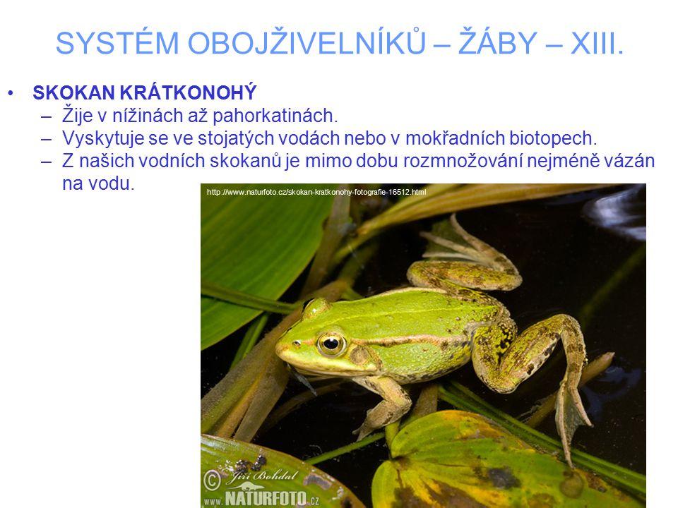 SYSTÉM OBOJŽIVELNÍKŮ – ŽÁBY – XIII. SKOKAN KRÁTKONOHÝ –Žije v nížinách až pahorkatinách. –Vyskytuje se ve stojatých vodách nebo v mokřadních biotopech