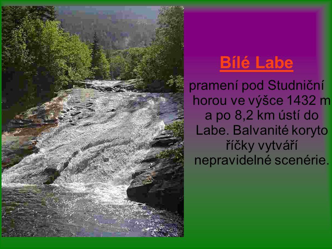 Bílé Labe pramení pod Studniční horou ve výšce 1432 m a po 8,2 km ústí do Labe. Balvanité koryto říčky vytváří nepravidelné scenérie.