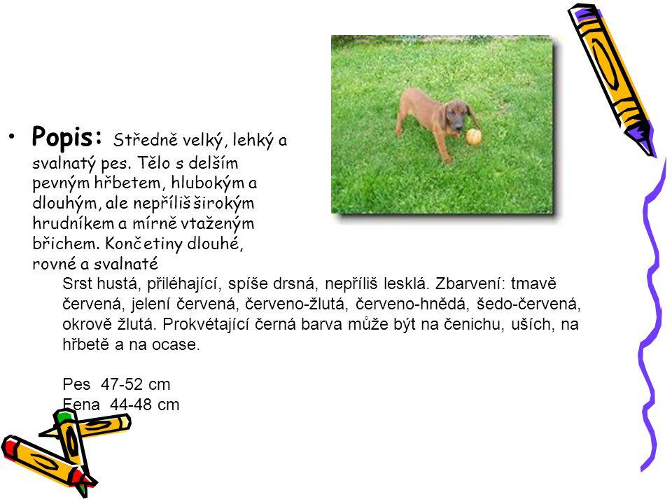 Popis: Středně velký, lehký a svalnatý pes.