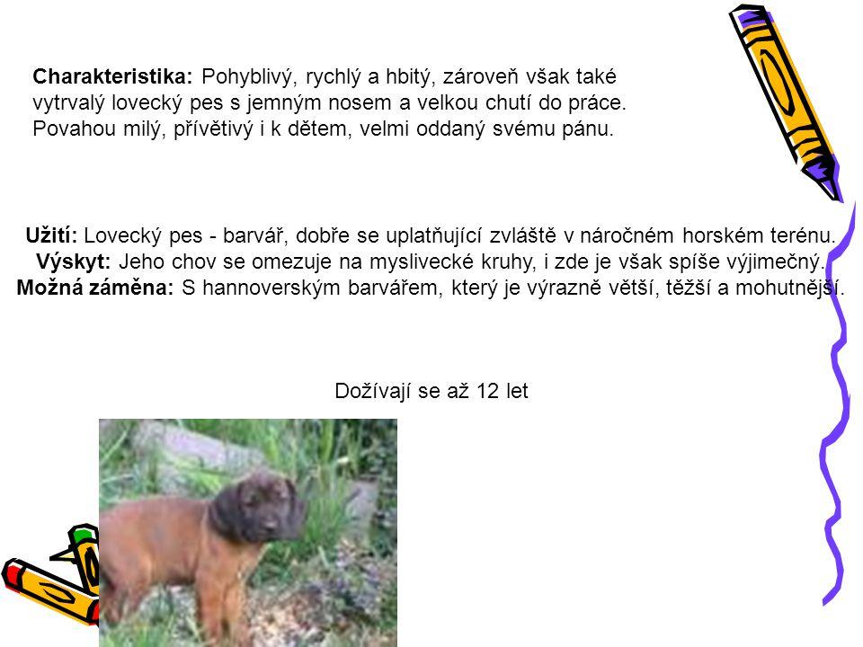 Charakteristika: Pohyblivý, rychlý a hbitý, zároveň však také vytrvalý lovecký pes s jemným nosem a velkou chutí do práce.