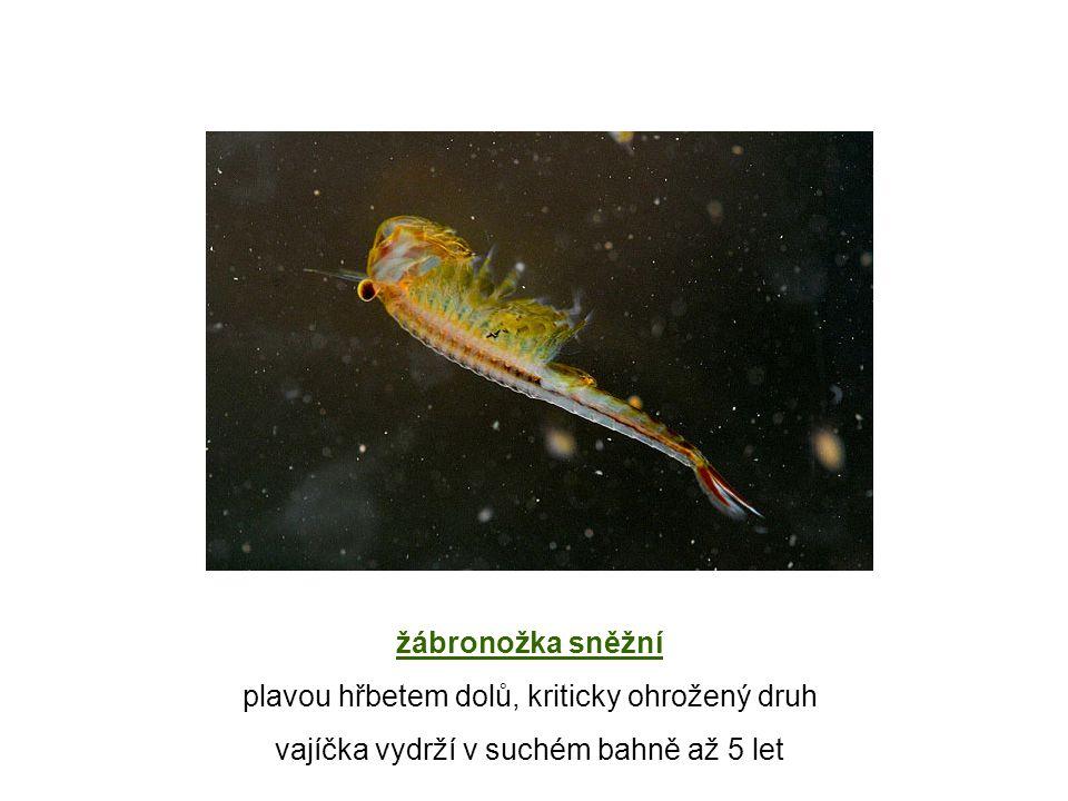 Odkazy http://cs.wikipedia.org/wiki/Soubor:Daphnia_magna.png http://www4.uwsp.edu/biology/faculty/dgraf/winvertebrates/Branchiopoda.html http://cs.wikipedia.org/wiki/Soubor:LepidurusApus.jpg http://leccos.com/index.php/clanky/buchanky http://planetbizzle.blogspot.cz/2010/09/drink-up-shrimps-on-house.html http://rybicky.net/atlasostatnich/rak_ricni http://www.guh.cz/edu/bi/biologie_bezobratli/html08/foto_033.html http://www.biolib.cz/cz/taxonimage/id10176/?taxonid=25494 http://provsechnydusicky-galerie.webnode.cz/album/slezske-muzeum-v-opave/a15-humr-evropsky-jedly-druh-jpg/ http://cs.wikipedia.org/wiki/Soubor:Macrocheira_kaempferi.jpg http://genca.rajce.idnes.cz/POZNAVACKA_ZIVOCICHOVE_-_prvni_cast,_konci_krabem/ http://revue.idnes.cz/vzpominky-mohou-chutnat-po-mori-do2-/lidicky.aspx?c=1999M200V02A http://www.guh.cz/edu/bi/biologie_bezobratli/html08/foto_039.html http://www.guh.cz/edu/bi/biologie_bezobratli/html08/foto_036.html http://www.guh.cz/edu/bi/biologie_bezobratli/html08/foto_037.html