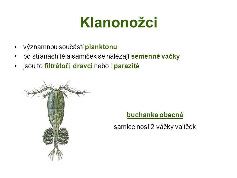 Klanonožci významnou součástí planktonu po stranách těla samiček se nalézají semenné váčky jsou to filtrátoři, dravci nebo i parazité buchanka obecná