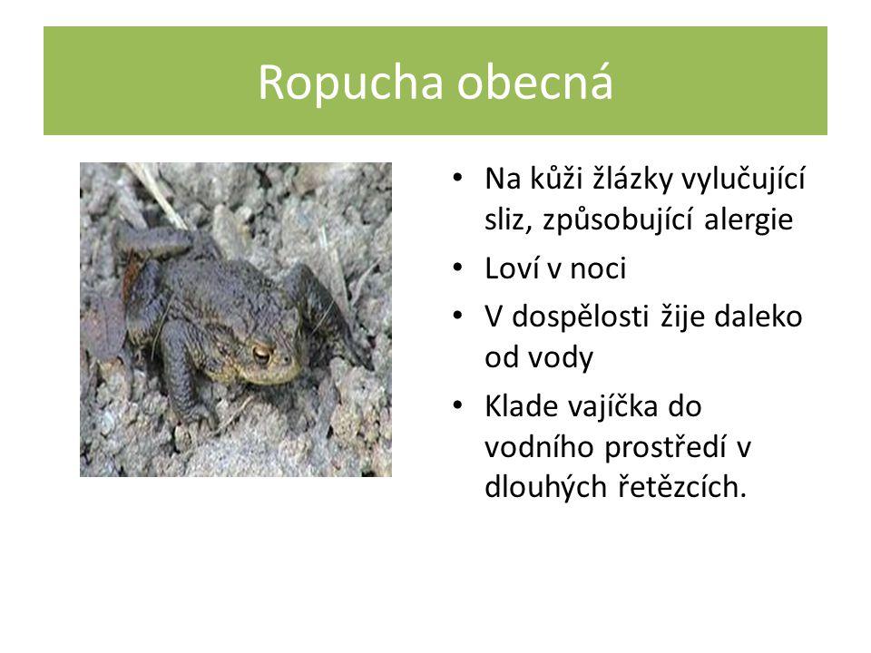 Ropucha obecná Na kůži žlázky vylučující sliz, způsobující alergie Loví v noci V dospělosti žije daleko od vody Klade vajíčka do vodního prostředí v dlouhých řetězcích.