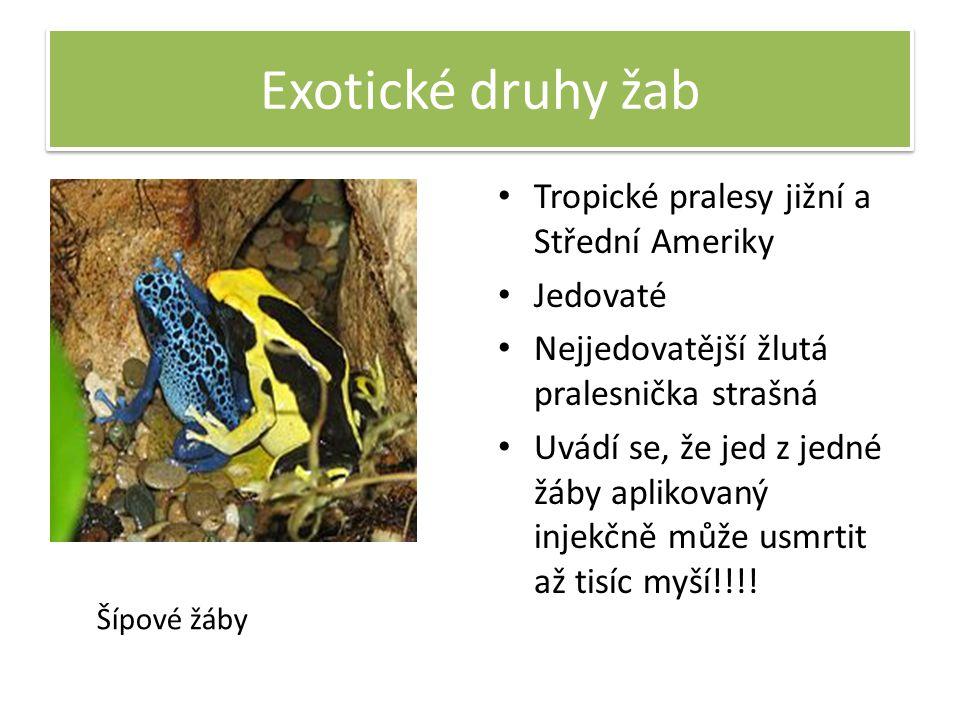 Exotické druhy žab Tropické pralesy jižní a Střední Ameriky Jedovaté Nejjedovatější žlutá pralesnička strašná Uvádí se, že jed z jedné žáby aplikovaný injekčně může usmrtit až tisíc myší!!!.
