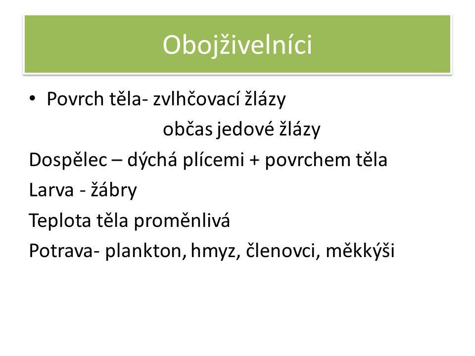 Obojživelníci Povrch těla- zvlhčovací žlázy občas jedové žlázy Dospělec – dýchá plícemi + povrchem těla Larva - žábry Teplota těla proměnlivá Potrava- plankton, hmyz, členovci, měkkýši