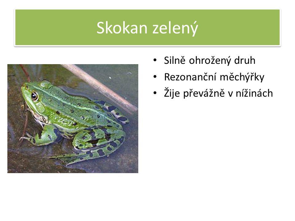 Skokan zelený Silně ohrožený druh Rezonanční měchýřky Žije převážně v nížinách
