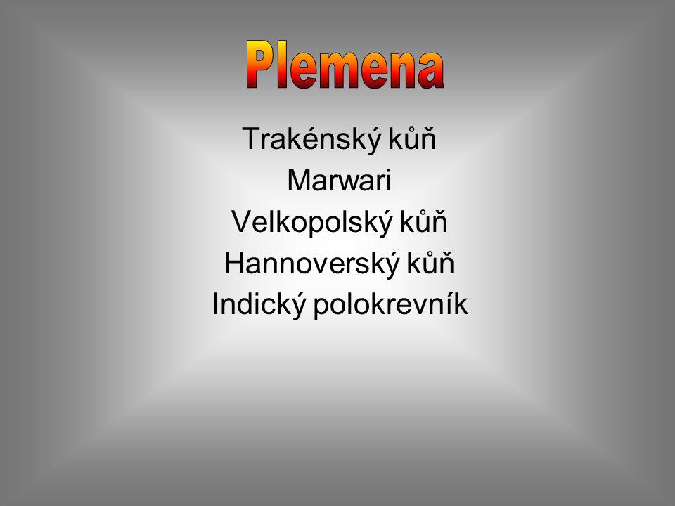 Původ : Vznikl ve 13.století v bývalé provincii Východní Prusko.