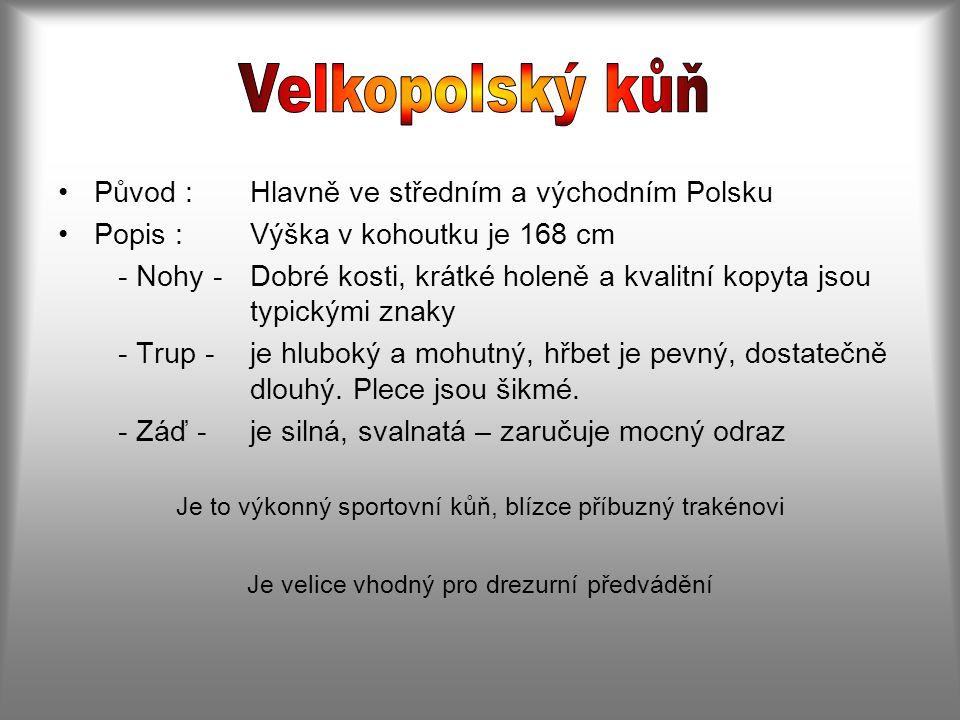 Původ :Hlavně ve středním a východním Polsku Popis :Výška v kohoutku je 168 cm - Nohy -Dobré kosti, krátké holeně a kvalitní kopyta jsou typickými znaky - Trup -je hluboký a mohutný, hřbet je pevný, dostatečně dlouhý.