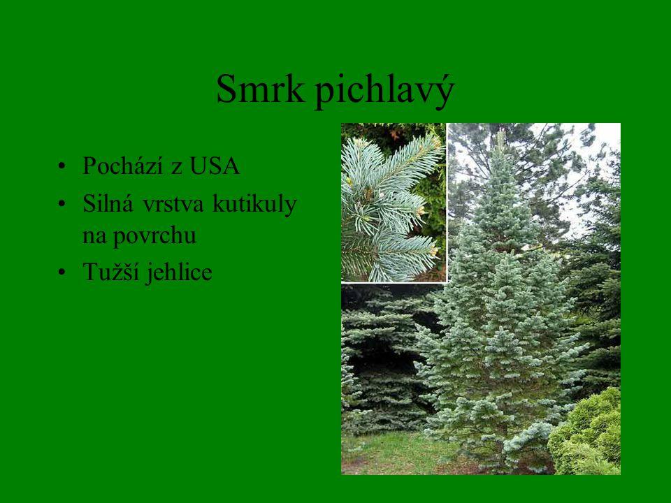Jedle bělokorá Ze spodu jehlice bílé voskové pruhy Vzpřímené a na stromě rozpadavé šišky Náchylná k živ.