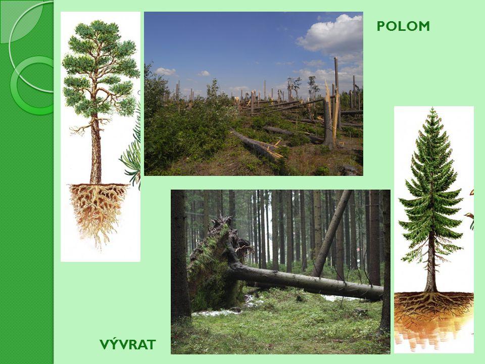 Proč je většina jehličnanů označována jako stálezelené rostliny.