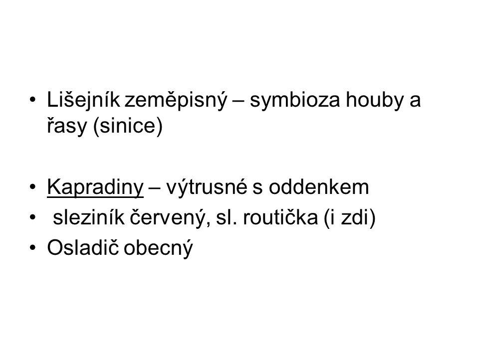 Lišejník zeměpisný – symbioza houby a řasy (sinice) Kapradiny – výtrusné s oddenkem sleziník červený, sl.