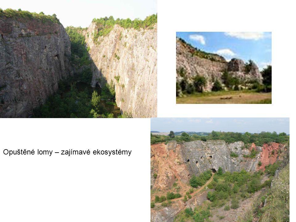 FAUNA Na čem závisí, zda se na skalách bude vyskytovat ten či onen živočich, ta či ona rostlina .