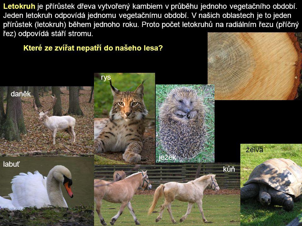 OPAKOVÁNÍ 1.Jaké tři složky tvoří les.2.Jak se říká lesu který není měněn či ovlivňován člověkem.