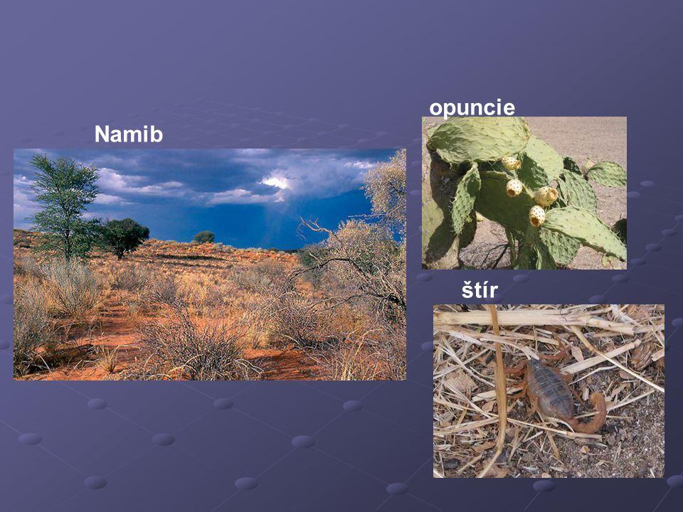 Namib opuncie štír