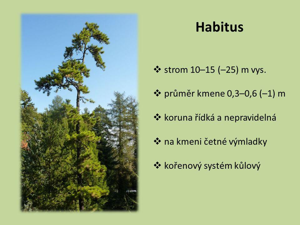 Habitus  strom 10–15 (–25) m vys.  průměr kmene 0,3–0,6 (–1) m  koruna řídká a nepravidelná  na kmeni četné výmladky  kořenový systém kůlový