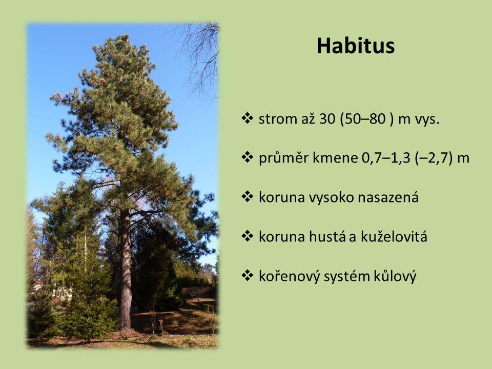 Habitus  strom až 30 (50–80 ) m vys.  průměr kmene 0,7–1,3 (–2,7) m  koruna vysoko nasazená  koruna hustá a kuželovitá  kořenový systém kůlový