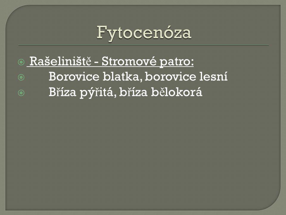  Rašeliništ ě - Stromové patro:  Borovice blatka, borovice lesní  B ř íza pý ř itá, b ř íza b ě lokorá