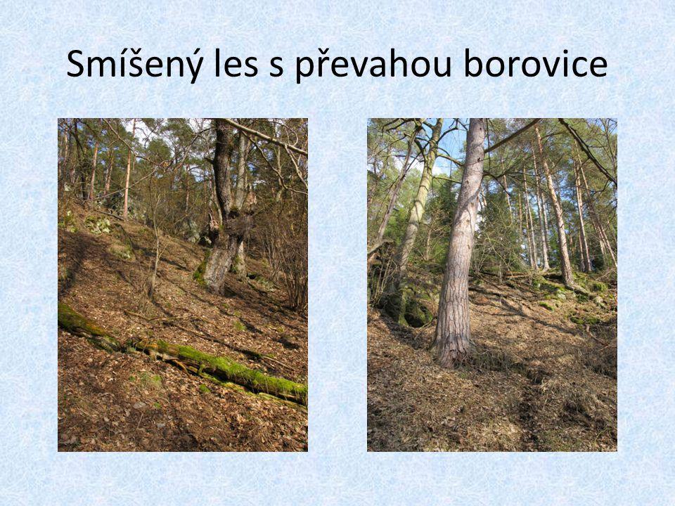 Smíšený les s převahou borovice